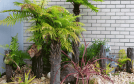 See our native Punga fern garden growing